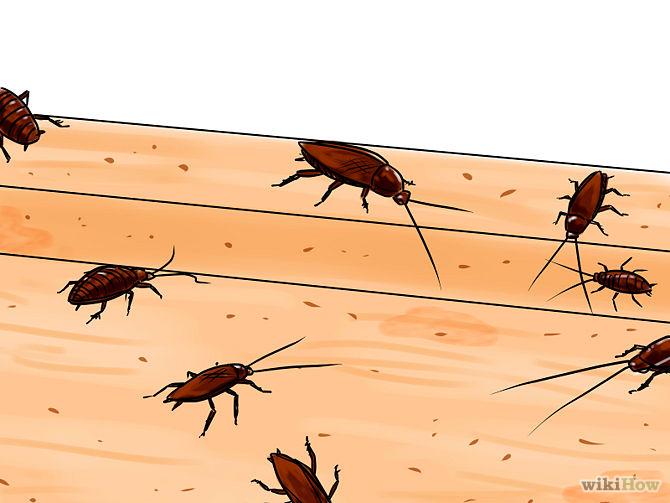 Как да прогоним хлебарките от дома ни?