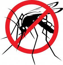 komar2