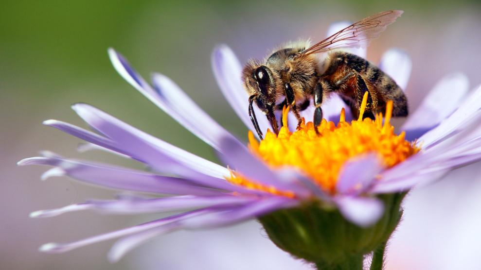 Какво наистина искат пчелите